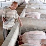 以前7块一斤,家家都养猪;现在18一斤,反而没人养了,咋回事?