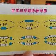 宝宝8个多月长2颗牙齿正常吗?