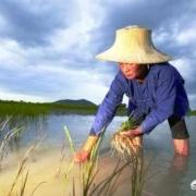 怎样才能使农民自动回村生产粮食?