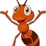 家里长蚂蚁了,很烦,买的蚂蚁药不管用,谁有高招可以连窝消灭?