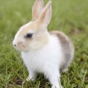 兔子与鼠相配么?