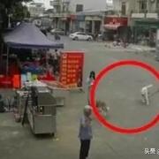 小女孩牵邻居家的狗绊倒老人去世,谁的责任更大?