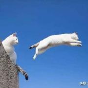 把猫从飞机上扔下了会摔死吗?