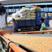 小麦收购价格持续上涨,小麦收购商难以收到小麦,为什么会这样?