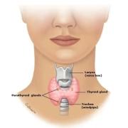 发现甲状腺结节怎么办?