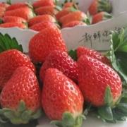 给领导家孩子买了两箱草莓🍓,一箱2盒,然后领导第二天给我带了1盒,大家怎么看?