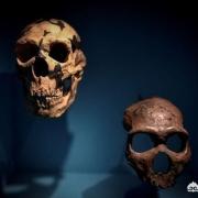 尼安德特人的灭绝原因是什么?