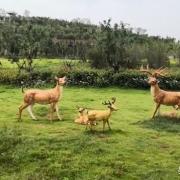 郑州排名第一的公园是哪个?