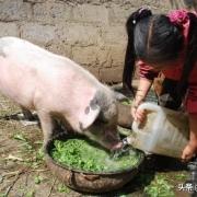我认为在农村每户圈养一二头猪,并不会污染环境,您认为呢?