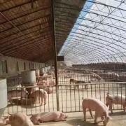 建一个长50米,宽7米的阳光猪舍大概多少钱?要注意什么?