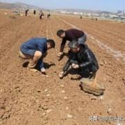 农村人没有田地了,以后靠什么生活?