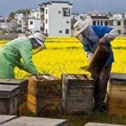 """为什么有些人放着超市精装的蜂蜜不买而要通过各种渠道购买农村的""""土蜂蜜""""呢?"""