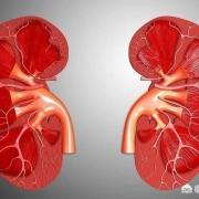 肾功能好的人,有哪些表现?哪些伤肾习惯,现在改正还不晚?