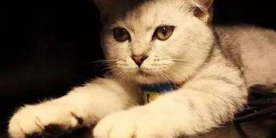 猫会认主人吗?