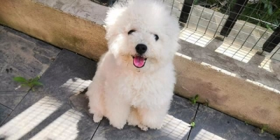 狗狗到底能有多可爱?