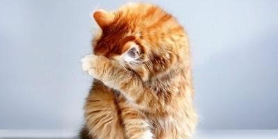 猫的行为会随季节变化吗?
