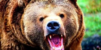 上海野生动物园一饲养员实施作业时被熊攻击不幸遇难,如何防范此类事故再次发生?