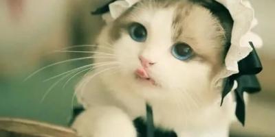 小猫多大会自己去猫砂盆上厕所?