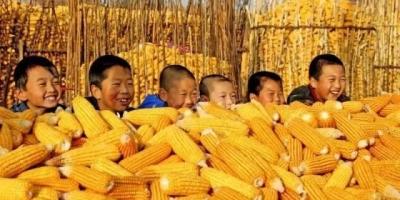 玉米价格一路走好,会突破历史新高吗?为什么会出现这种现象?