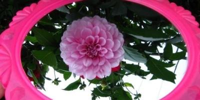 【哲学思考】提问:镜中花是不是花?