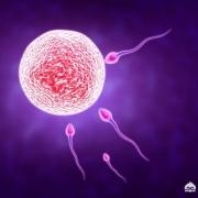 排卵日才能受孕吗还是排卵期也可以?