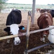未来两年,畜禽养殖前景如何?