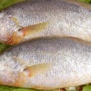 中国有什么好吃的海鱼?