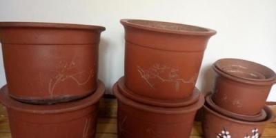盆栽栀子花适合什么样的盆,适合什么样的土?该注意些什么?