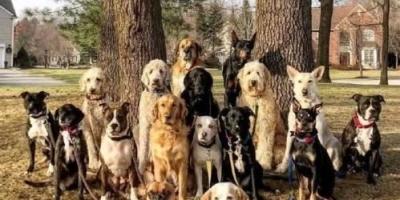 狗狗之间是如何确立地位高低的呢?
