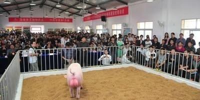为什么现在有些猪肉买回家煮的时候有一股骚味?