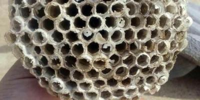 农村常见的马蜂窝是药材吗,有什么作用?使用时怎么处理?