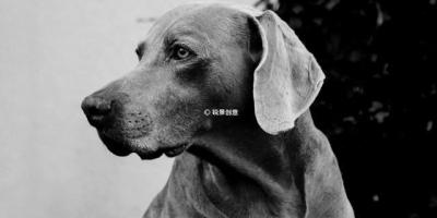 如果狗狗把你当主人,那么它会怎么体现出来呢?
