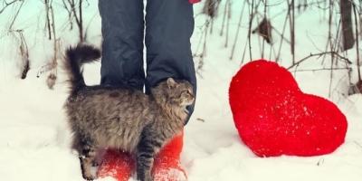 养猫过程中,哪个瞬间让你感到被治愈?