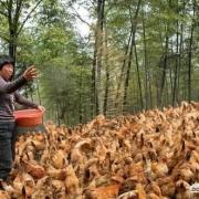 养殖行业未来5-10年前景如何?