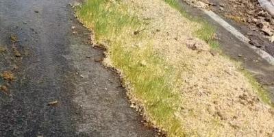 今年是暖冬还是冷冬?何时种小麦合适?