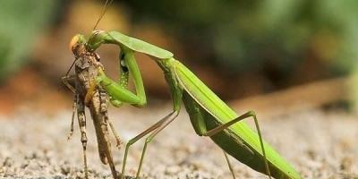 常见的昆虫哪些是益虫哪些是害虫?