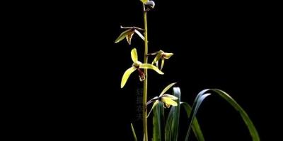 家里养什么兰花比较适宜?