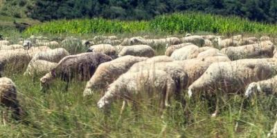 我28岁女牧民,想买一辆越野车,可以在草原上跑,开出去还有个小面子,有哪些推荐?