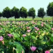 湖北洪湖真的会脱离荆州,加盟武汉城市圈吗?