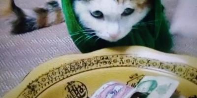 和男朋友一起养了一只猫咪,现在分手了,都不想自己养,该怎么办啊?