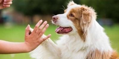 大家如何看待遛狗不拴绳,还说自己家狗不咬人的现象?