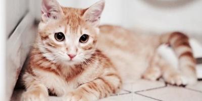如果全国禁食猫肉,你怎么看?