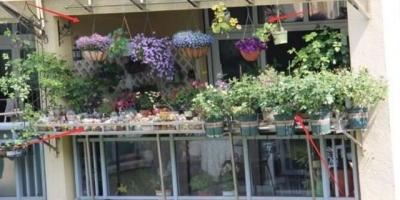 阳台想养花要怎么弄?
