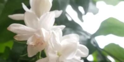 喜欢养花的朋友们,晒晒自己的花花草草欣赏一下可以吗?