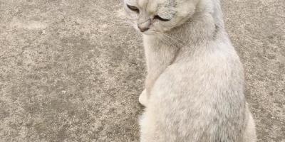 十几块一斤的猫粮真的是「毒猫粮」吗?