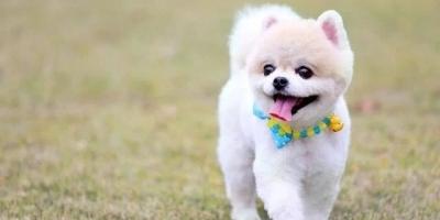狗狗的死穴是什么,它们最恐惧什么事情?