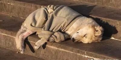 宠物狗如果被抛弃,会有什么结果?