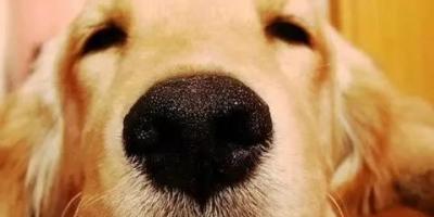 为什么城市里的狗走丢了就找不到家呢?