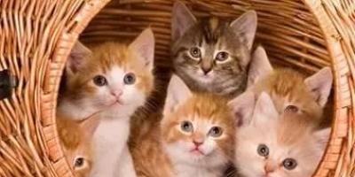 猫最怕什么味道?