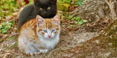 流浪猫一直在家门口叫,一出门就跟着,怎么办?